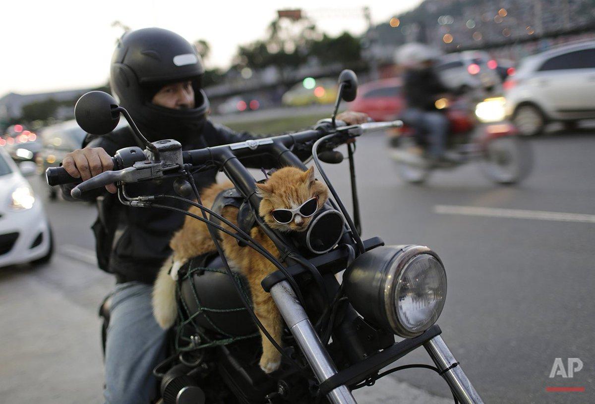gato motero